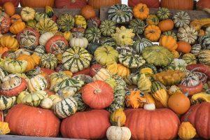 pumpkins-504148_640